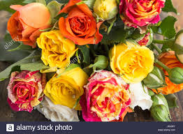 Multi Colored Roses Bouquet Of Multicolored Roses As A Background Stock Photo Royalty