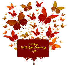 7 easy fall gardening tips for your monarch butterfly garden