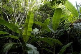 jungle simple english free encyclopedia