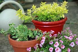 fafardseason your garden with designer herbs fafard