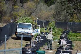 agricultural journalism jobs ukiah 2nd mendocino county tribe files claim over pot eradication