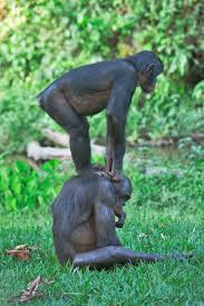 yoga in the animal kingdom getty images