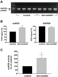 hmg coa reductase inhibitors improve endothelial dysfunction in