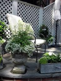 summer annuals boxwood ivy urn planter container urban