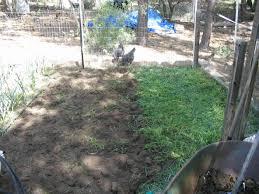 backyard gardener grow a fall cover crop november 9 2011