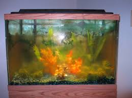 How To Clean Fish Tank Decorations How To Clean A Dirty Fish Tank 12 Steps