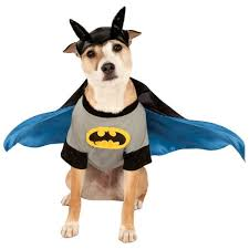 Cute Dog Halloween Costumes 20 Batman Dog Costume Ideas Bat Dog