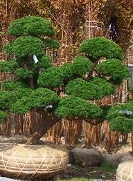 formation chambre d hote taille japonaise niwaki hortitherapie frederique dumas meditation