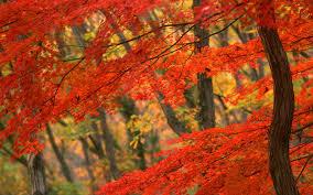 autumn nature leaves hd wallpaper 1625994