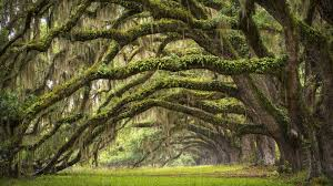 South Carolina landscapes images Nature landscape trees branch leaves south carolina usa jpg