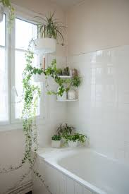 bathroom wallpaper hi res stunning plants in bathroom green