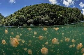 Palau Map Palau Jellyfish Lake Map