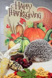 111 best all things hedgehog images on pinterest baby hedgehogs
