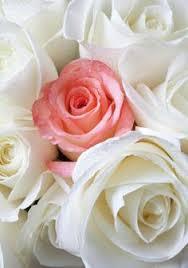 rose theme alpha 3 roses and love קהילה google roses pinterest google