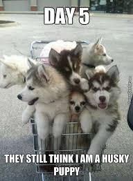 Cute Puppy Meme - cute puppy meme tumblr image memes at relatably com