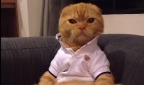 Thanksgiving Cat Meme - memes archives cats vs cancer