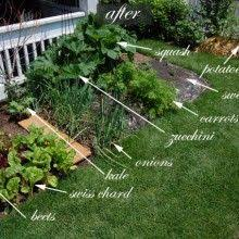 Best Front Yard Veggie Gardens Images On Pinterest Veggie - Backyard vegetable garden designs
