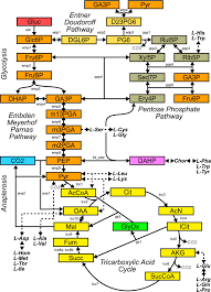 the topology of metabolic isotope labeling networks bmc