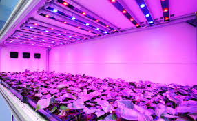 horticultural led grow lights horticulture led lighting market industry outlook analysis report