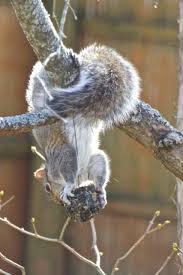 fun ways to help backyard wildlife through winter act out with