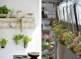 plante cuisine decoration la fabrique à déco des plantes dans la cuisine plantes co