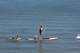 active traveler top paddleboarding spots cape cod chamber of