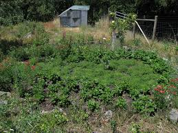 the backyard non profit permaculture artisans