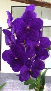 purple orchids the 25 best purple orchids ideas on orchid flowers