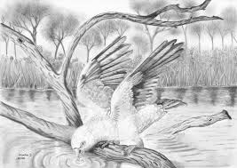 gallery best pencil sketch of nature drawing art gallery