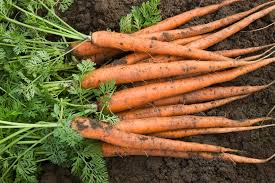 Root Vegetable Allergy - plants that can cause skin irritations