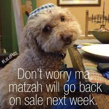 Passover Meme - 62 best pet humor images on pinterest adorable animals dog cat