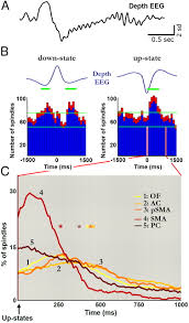 Anterior Association Area Sleep Spindles In Humans Insights From Intracranial Eeg And Unit