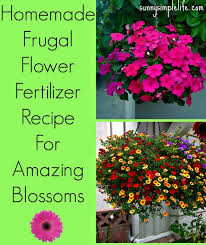 Homemade Flowers Homemade Flower Fertilizer Diy Flower Food Frugal Homemade Plant