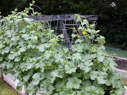 Garden Trellis Netting Plant Supports For Tomato Rose Strawberry In Garden Vegetable Farm