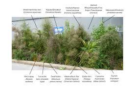 native plants nz annotated garden images native plant demonstration garden