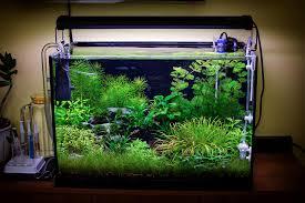 Japanese Aquascape by Submerged Jungle By Fekete Tamas Aquascape Awards Jungle