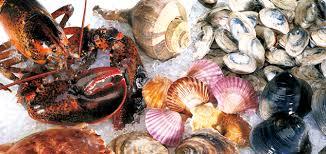 Cape Cod Clam Bake - cape cod shellfish u0026 seafood co inc u2013 wholesale fresh shellfish
