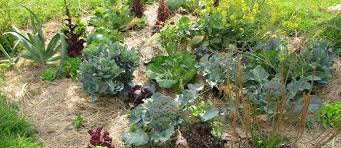 mulching with purpose and precision the permaculture research