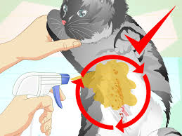 4 ways to make an herbal flea remedy for cats wikihow