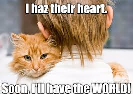 Cat Soon Meme - lolcats soon lol at funny cat memes funny cat pictures with