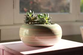 plants that don t need sunlight to grow houseplant happy how to add some green to your home journal