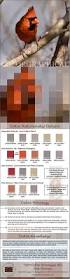 Winter Color Schemes by Bold Winter Color Palette Visual Ly