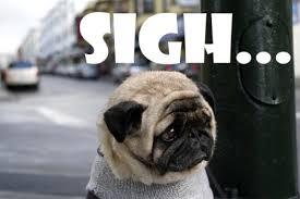 Puppy Face Meme - image sad puppy 2010 games jpg walking dead wiki fandom