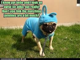 Pajama Kid Meme - i has a hotdog pajamas funny dog pictures dog memes puppy
