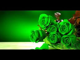 green roses green live wallpaper