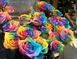 multicolored roses rainbow roses all colors in one