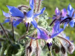 plants that keep mosquitoes away pest preventing plants some species repel mosquitoes fleas