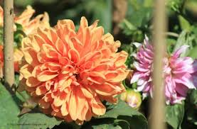 my india travel flowers of botanical garden 1 ooty