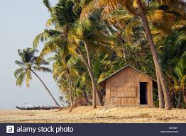 Decorative Trees In India Decorative Wicker Hut Amongst The Palm Trees On The Beach At