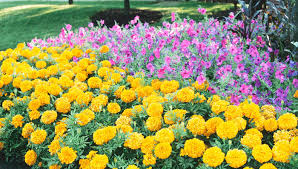 color designs design your landscape